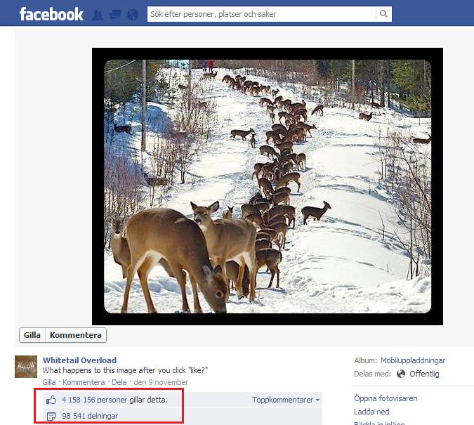 click like on facebook se what happens